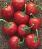 cherry-pepper